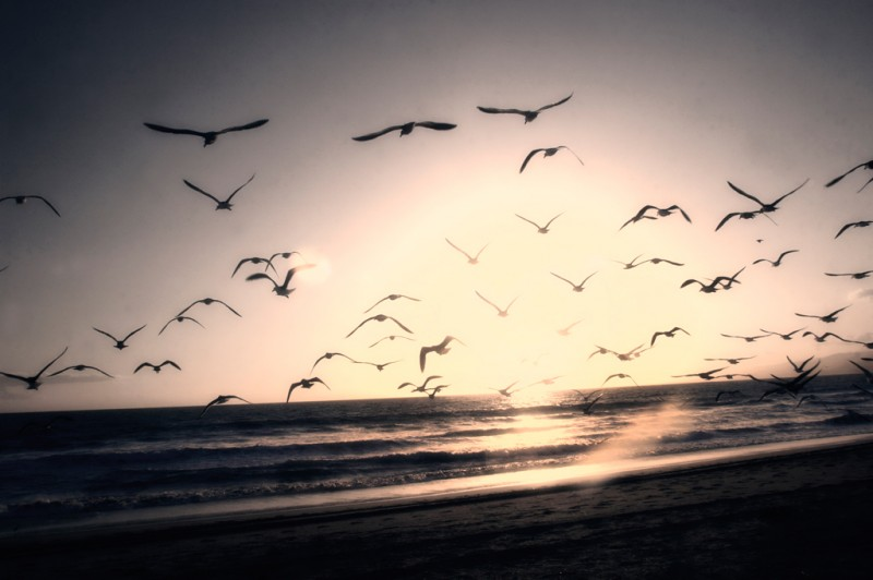 Seagulls at the beach in Los Angeles