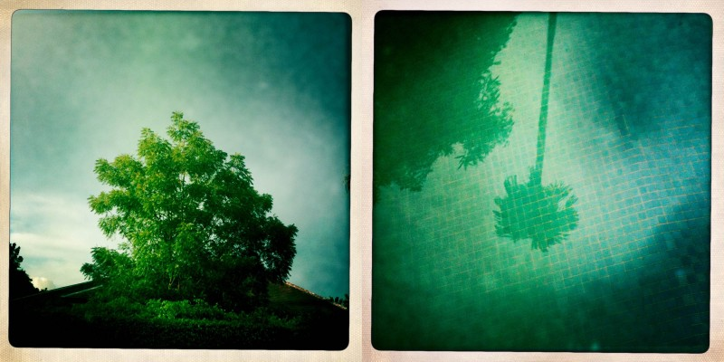 Diptych photo of trees