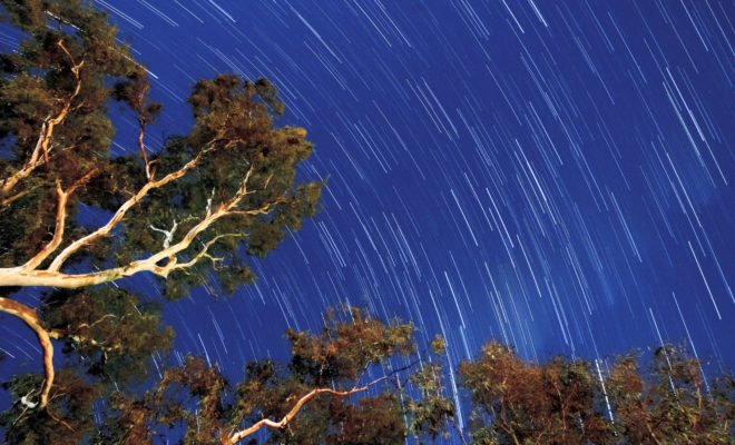 A star trail over gum trees at Bolto Reserve in Mannum, South Australia, equivalent to a 30-minute exposure. Sometimes I need to remind myself that, were it not for the Will of God, I would have nothing in this earthly life. There is so much for which to be grateful.